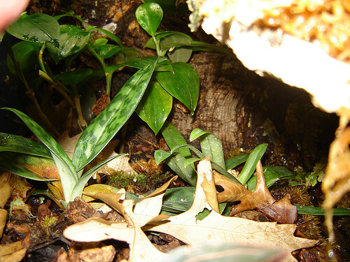 Setting Up A Vivarium For Fire Bellied Toads