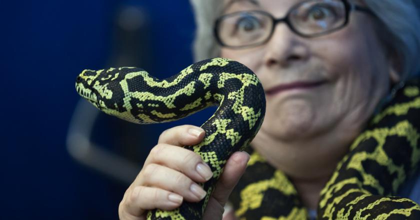 handling reptiles