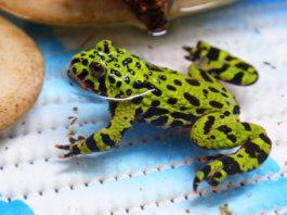 housing fire bellied toads