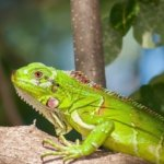 6 Reasons Why You Should Join A Reptile Society Today