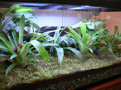 Moss as a substrate in a reptile cage.