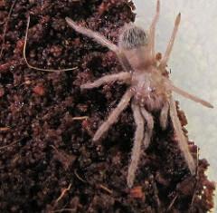 Coir makes an ideal tarantula substrate.