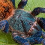 The Beginners Guide to Feeding Tarantulas
