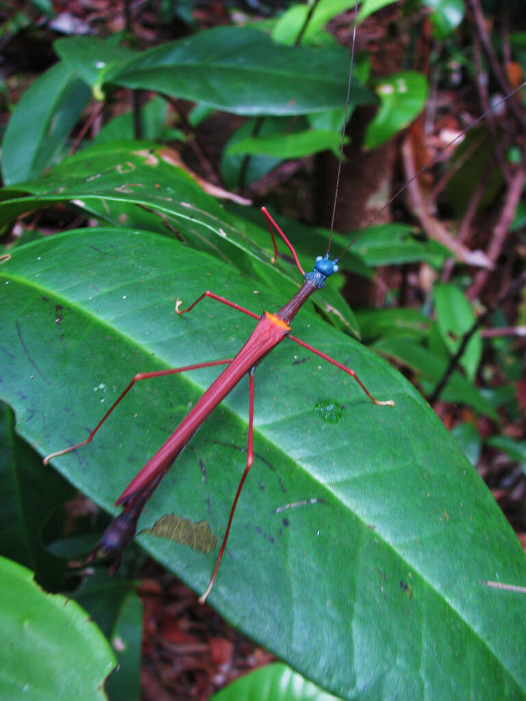 stick insect photo