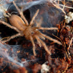 How to Care for Tarantula Spiderlings