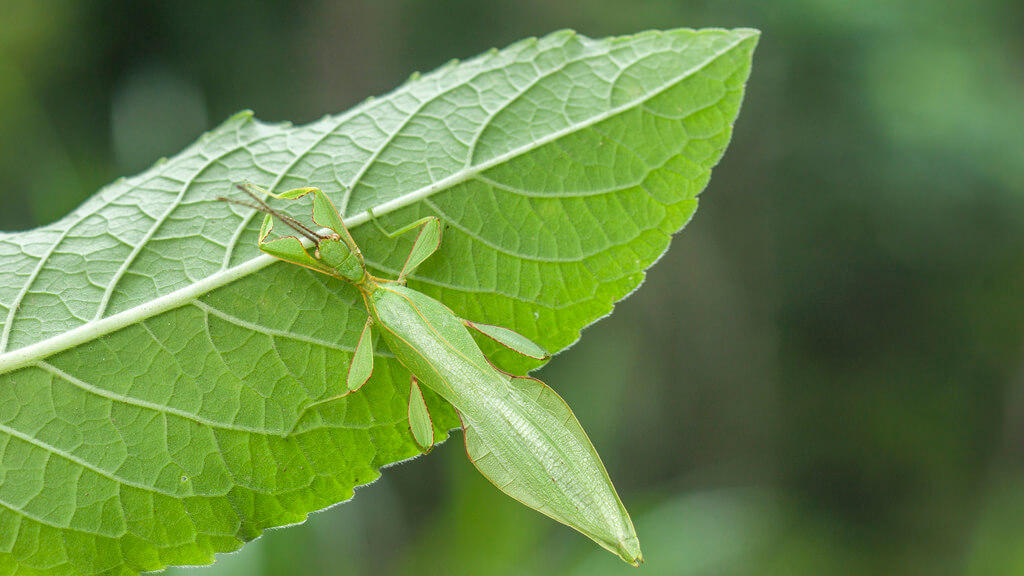 stick insects photo