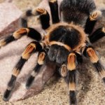 Humidity for Tarantulas