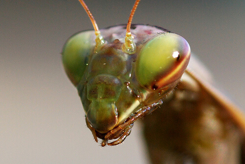 crickets photo