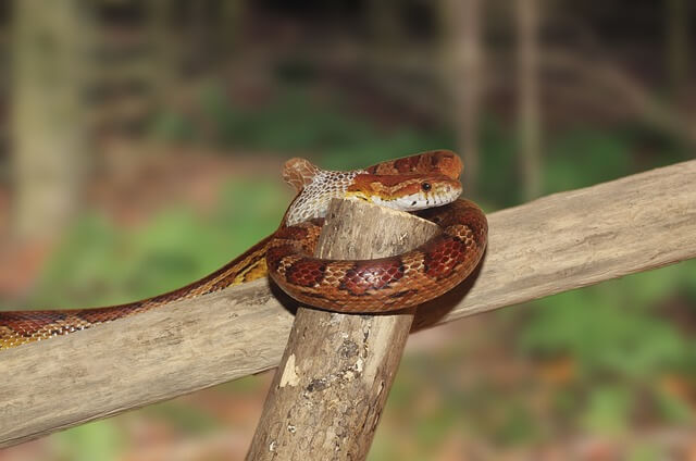 snake vivarium photo