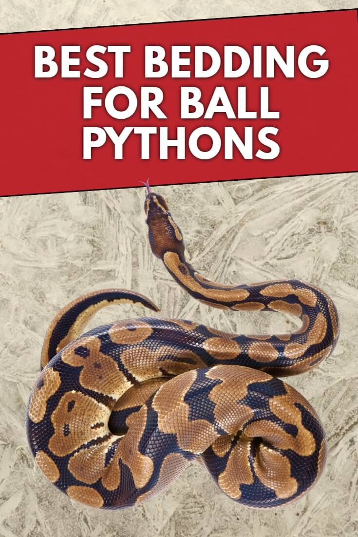 What is the best bedding for ball pythons? Written by a long term reptile keeper we look at all the different options on the market to help you make the best choice for your pet snake.