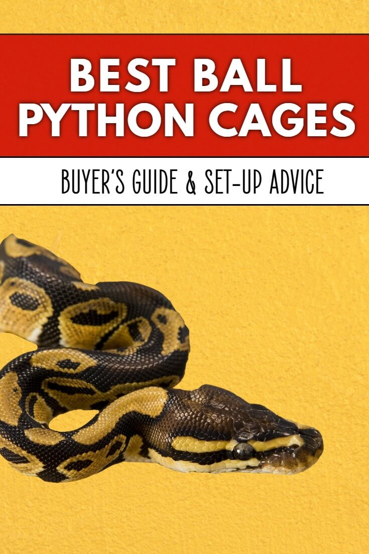 Ball pythons require very specialist cages if they are to remain fit and healthy in captivity. This article examines the best cages and vivariums for ball pythons to help you make the right decision for your pet snake.
