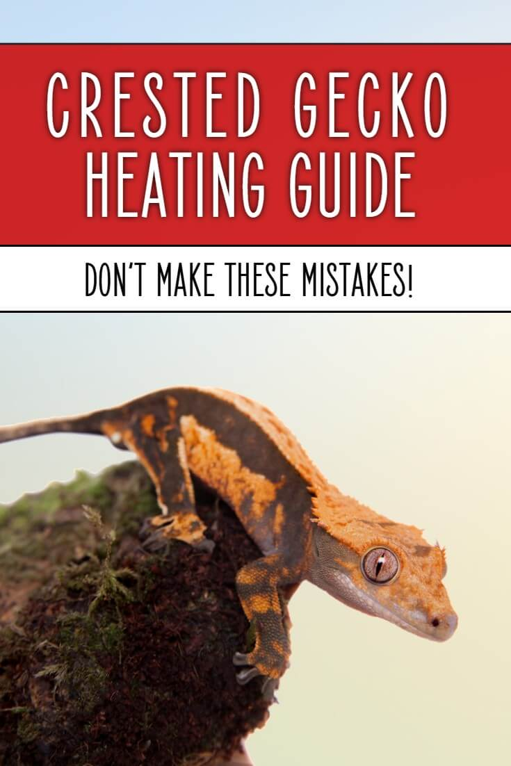What are the best crested gecko heaters for your tank? How warm should your crested gecko cage be, and how best to heat it? Find out in this detailed guide to heating your pet gecko vivarium.