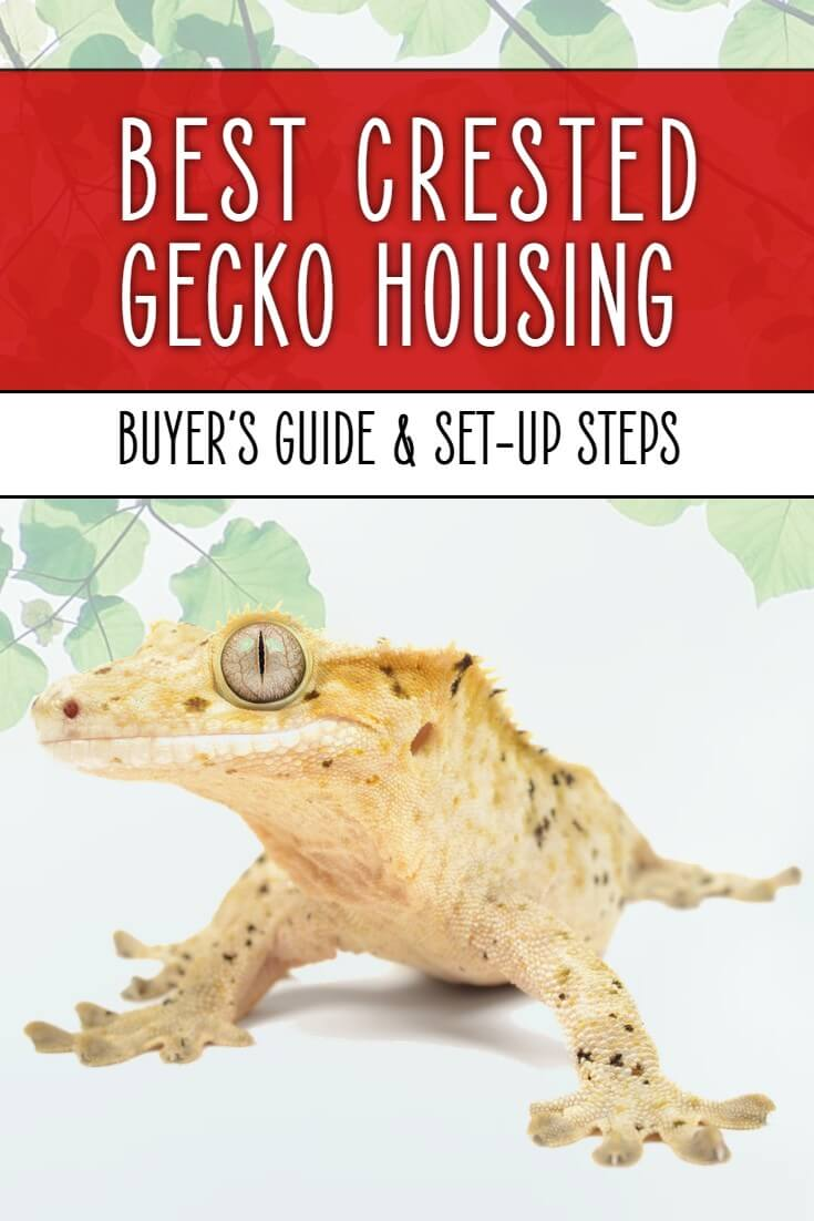 Looking for the best crested gecko cage, tank or vivarium? If so let me walk you through your options in this guide, so you can choose the perfect home for your pet reptile.