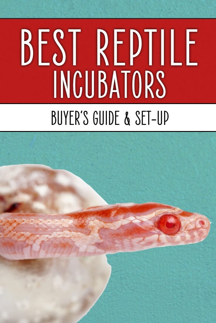 What are the best reptile egg incubators? While reptile eggs can be very sensitive to environmental conditions, many commonly-sold incubators aren't very good. This guide breaks them all down, discussing those models you should consider for your pet in this buyer's guide.