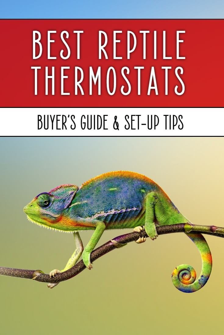 Best Reptile Thermostats: How to Choose A Thermostat
