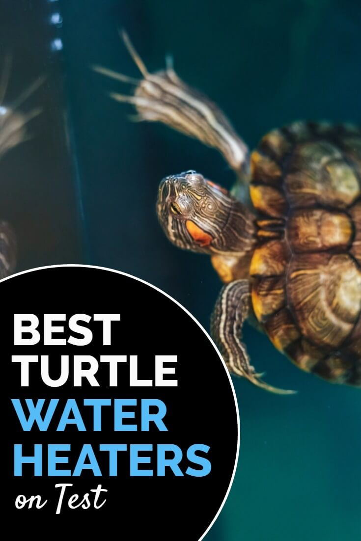 What are the best turtle water heaters? When turtles get too cold they stop feeding and can become ill, so it's important to gently heat the aquarium water. Choosing the right heater is harder than it sounds, unless you follow this handy buyer's guide.
