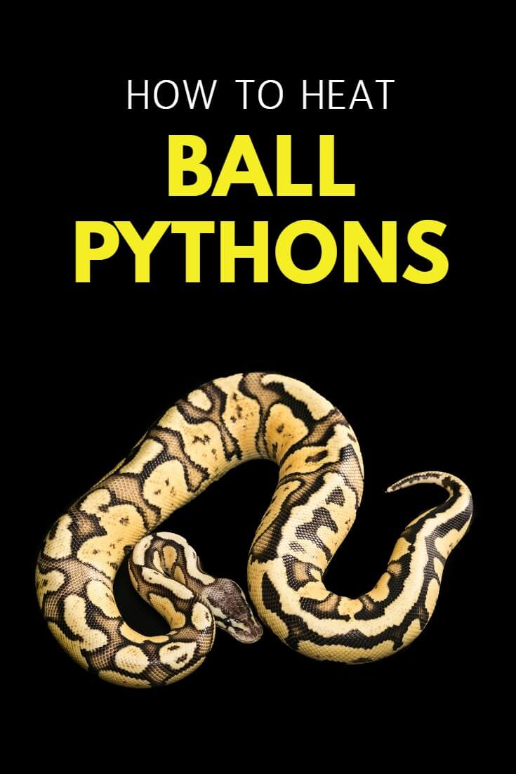 Ball pythons come from Africa, where they are used to warm temperatures. In captivity, a cold ball python may become weak or refuse to eat so heating ball pythons correctly is essential. This guide discusses your options and how best to keep your pet reptile warm in winter.