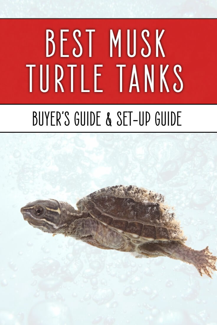Musk turtle tanks need to tick an awful lot of boxes - so which tanks are best for these amazing little reptiles? Find out in this detailed buyer's guide for pet owners.