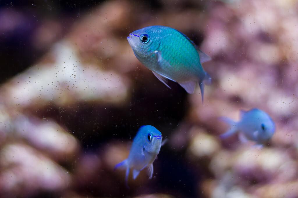 fishtank photo