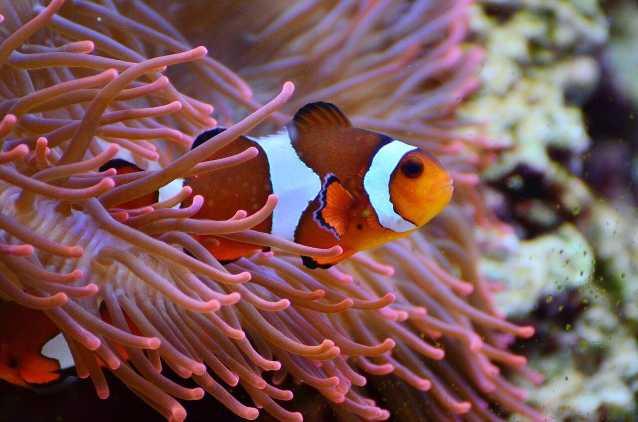 marine fish photo