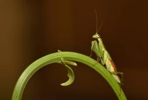 Wondering if it's safe to hold a praying mantis?