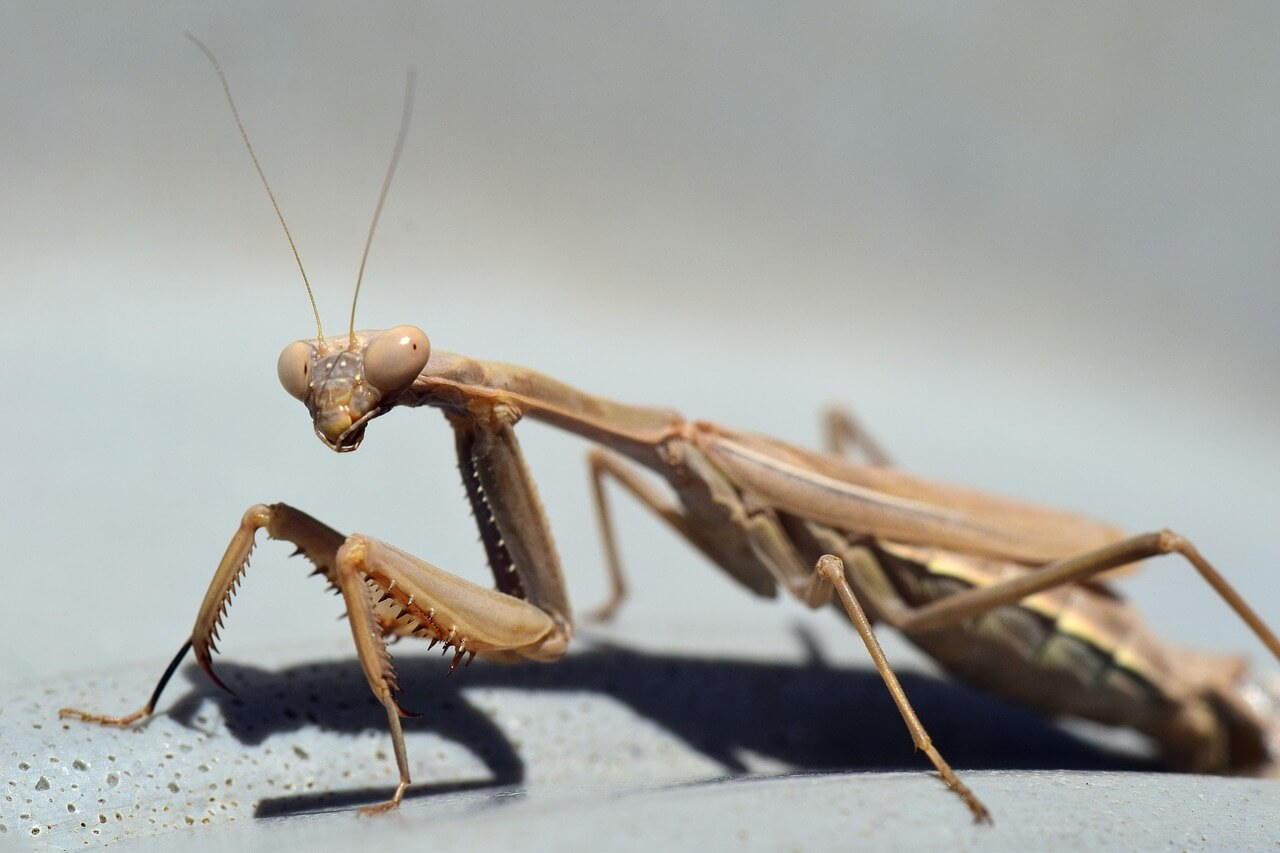 mantis eggs photo